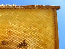 honungskaka royaltyfria foton