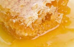 honungskaka Fotografering för Bildbyråer