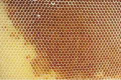 honungskaka Arkivfoton
