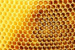 Honungskaka Arkivbilder