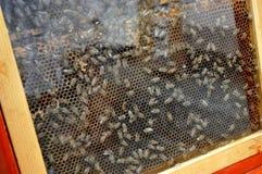 Honungskaka Arkivfoto