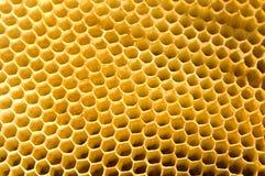 honungskaka Royaltyfri Bild