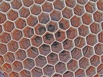 Honungskaka vektor illustrationer