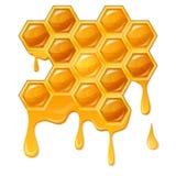 Honungskaka med flödande honung Royaltyfri Fotografi