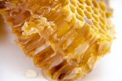 Honungskaka med honung Royaltyfria Foton