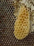 Honungskaka med honung Royaltyfri Fotografi