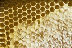 Honungskaka med honung Royaltyfri Foto