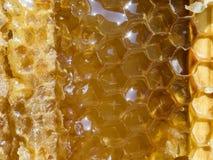 Honungskaka med honung, närbild, makro Arkivfoto