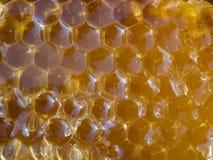 Honungskaka med honung, närbild, makro Royaltyfri Bild
