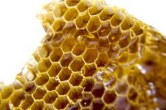 Honungskaka med honung på vit bakgrund Fotografering för Bildbyråer