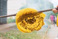 honungskaka mycket av bin i hand Royaltyfria Foton