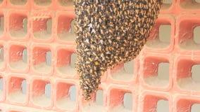 Honungskaka och levande honungbi arkivfilmer