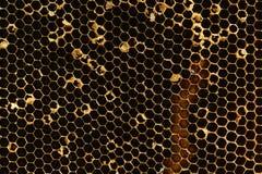 Honungskakatextur Royaltyfri Fotografi