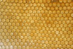 Honungskakor i bikupa arkivbilder