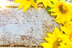 Honungskakor närbild royaltyfria bilder