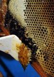 Honungskakor och bivax Arkivfoton