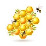 Honungskakor som isoleras på white Royaltyfria Bilder