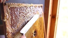 Honungstekflott från honungskopan på honungskakan, över gul bakgrund Tjock organisk honung som doppar från trähonungen arkivfilmer