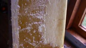 Honungstekflott från honungskopan på honungskakan, över gul bakgrund Tjock organisk honung som doppar från trähonungen stock video