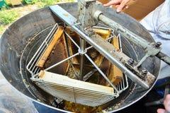 Honungutsugningsfläkt Royaltyfria Foton