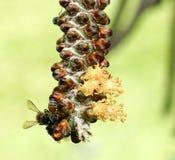 Hony gör formträdet arkivfoton