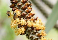 Hony robi od drzewa Fotografia Stock