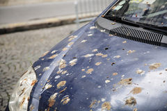 Hood of car with lot of bird droppings, bad parking concept Royalty Free Stock Photos