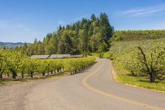 Hood River landscape and farms Oregon state. Hood River farmlands and landscape in Oregon state stock photography