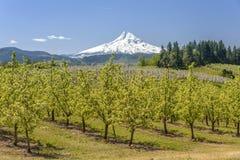 Hood River landscape and farms Oregon state. Hood River farmlands Mt. Hood landmark Oregon state stock images