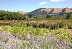 Hood River Oregon garden and hills. Stock Photography