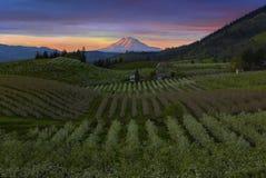 Hood River Pear Orchards bei Sonnenuntergang in Oregon Stockbild
