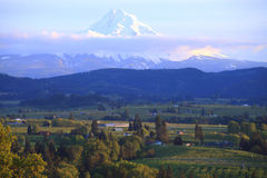 Hood River valley OR. & Mt. Hood. Stock Image