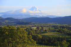 Hood River valley OR. & Mt. Hood. Stock Photos