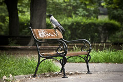 Hooded Crow on a bench. Hooded Crow alighted on a bench in the park Royalty Free Stock Image