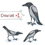 Hooded Crow Set. Hooded crow character design set number 1. Vector illustration, EPS 10. Contains transparent objects Royalty Free Stock Photography