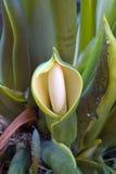 hooded exotisk blomma Royaltyfri Bild