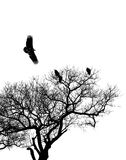 Hooded Vultures Royalty Free Stock Photos