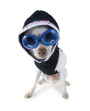 Hoodie dog Royalty Free Stock Image