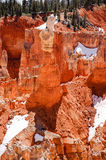 Hoodoo, Agua Canyon, Bryce Canyon on sunshine Stock Photos