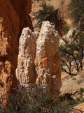 Hoodoo. A hoodoo rises up amongst the high desert vegetation in Bryce Canyon, Utah Royalty Free Stock Photography