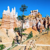 Hoodoo rock spires of Bryce Canyon Royalty Free Stock Images