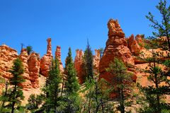 Hoodoo spires and ponderosa pines in Bryce Canyon National Park. Hoodoo spires and ponderosa pines along the Tower Bridge Trail in Bryce Canyon National Park Royalty Free Stock Photography