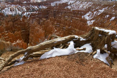 HooDoos in Bryce Canyon National Park Stock Photography