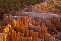 Hoodoos in canyon di Bryce Immagini Stock Libere da Diritti
