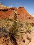 Hoodoos Cliffs  Desert Landscape Badlands Stock Photos