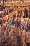 Hoodoos in early morning light in Bryce Canyon National Park. Orange and pink hoodoos in early morning light, Bryce Canyon National Park, Utah Royalty Free Stock Images