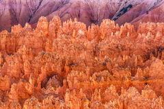 Hoodoos On Fire At Bryce Stock Photo