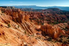 Hoodoos and Pine Trees in Bryce Canyon Stock Image