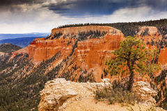 Hoodoos Tree Bryce Point Bryce Canyon National Park Utah Stock Photos