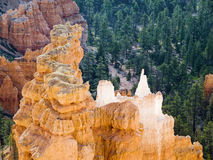 Hoodos of Bryce Royalty Free Stock Image